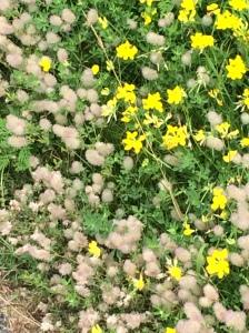 bikeflowers2