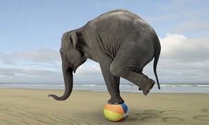 elephantbalance