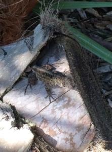 geckofriend