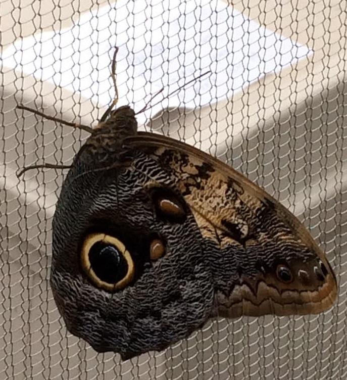 eyeballfly
