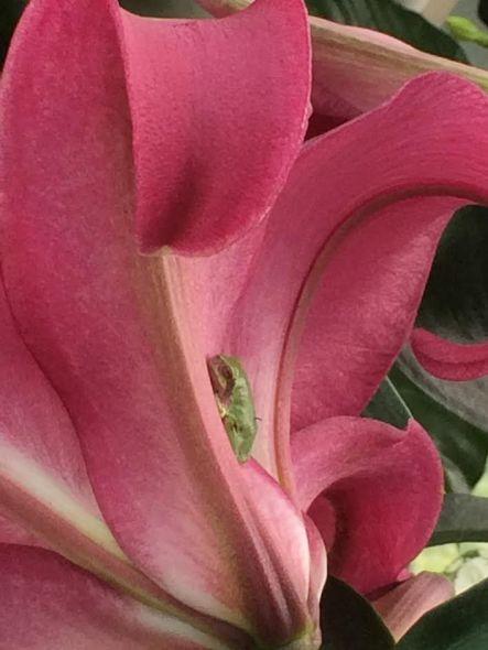 frogflower